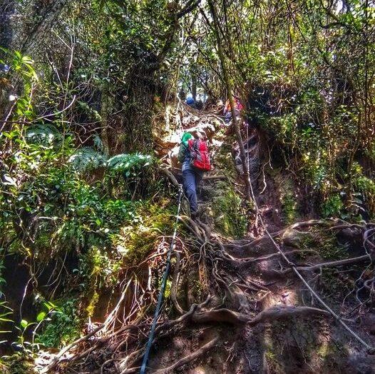 HIKING PINE TREE & TWIN PEAK, BUKIT FRASER, PAHANG